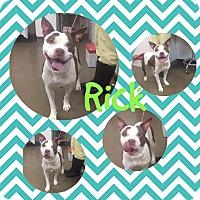 Adopt A Pet :: Rick - Steger, IL