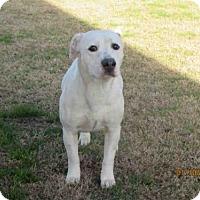 Adopt A Pet :: A078302 - Grovetown, GA