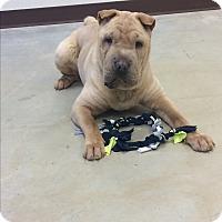 Adopt A Pet :: Brooks - Charlotte, NC