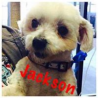 Adopt A Pet :: Jackson - Thousand Oaks, CA
