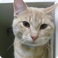 Adopt A Pet :: Ron - Hamburg, NY