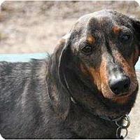 Adopt A Pet :: Fred - Toronto, ON