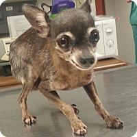 Adopt A Pet :: Kenny - Orlando, FL
