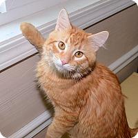 Adopt A Pet :: Sawyer - Medina, OH