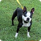 Adopt A Pet :: ANGELINA JOLIE