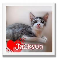 Adopt A Pet :: Jackson - Palm Desert, CA