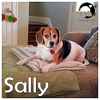 Adopt A Pet :: Sally - Novi, MI