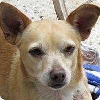 Adopt A Pet :: Ripley! Request Foster - St Petersburg, FL