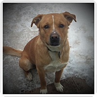Adopt A Pet :: MARLEY - Medford, WI
