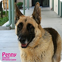 Adopt A Pet :: Penny - Santa Maria, CA
