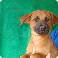 Adopt A Pet :: Felix - Oviedo, FL