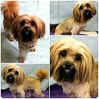 Adopt A Pet :: Primrose - Forked River, NJ