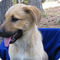 Adopt A Pet :: Chris - Charlemont, MA