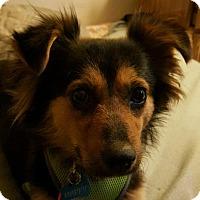 Adopt A Pet :: Happy - Spring Valley, NY