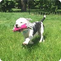 Adopt A Pet :: Watts - Rockaway, NJ