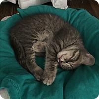 Adopt A Pet :: Timothy - Harriman, NY, NY