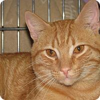 Adopt A Pet :: Marek - New Kensington, PA