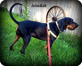 Black and Tan Coonhound Mix Dog for adoption in Washington, Pennsylvania - Jebediah