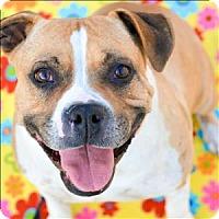 Adopt A Pet :: Rue - Vallejo, CA