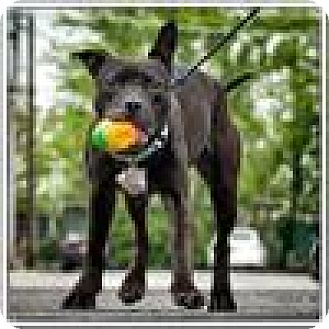 Terrier (Unknown Type, Small) Mix Dog for adoption in Freeport, New York - Faith