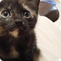 Adopt A Pet :: Romona - Whitney, TX