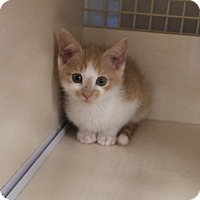 Adopt A Pet :: Nathan - Plainville, CT