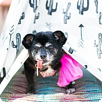 Adopt A Pet :: Oprah the Magical Unicorn - Los Angeles, CA