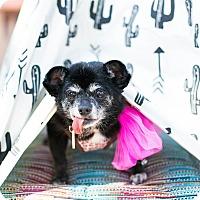Adopt A Pet :: Oprah the Magical Unicorn - Los Angeles, CA