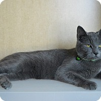 Adopt A Pet :: Pickles - Prince George, VA