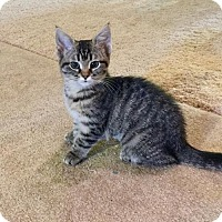 Adopt A Pet :: Nadine the Nugget  Fostered (Jamie O) - Troy, IL