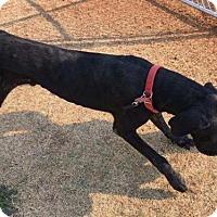 Adopt A Pet :: Hoover - Huntersville, NC