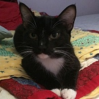 Adopt A Pet :: Clarinet - Santa Rosa, CA