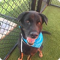 Adopt A Pet :: Vick - Edgewater, NJ