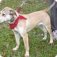 Adopt A Pet :: Monty, D36 - Mineral, VA