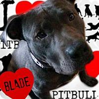 Adopt A Pet :: Blade - Des Moines, IA