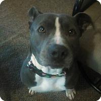 Adopt A Pet :: Ruby - Des Moines, IA