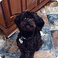Adopt A Pet :: Rosie - Goleta, CA