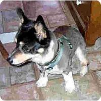 Adopt A Pet :: Camille - Kingwood, TX