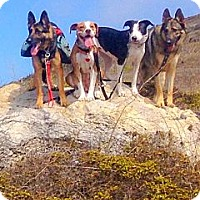 Adopt A Pet :: Taylor needs foster or home AS - Sacramento, CA