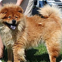 Adopt A Pet :: Olaf - Tucker, GA