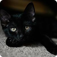 Adopt A Pet :: Tinker - Phoenix, AZ