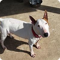 Adopt A Pet :: Sookie - Houston, TX