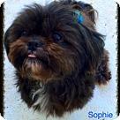 Adopt A Pet :: Sophie