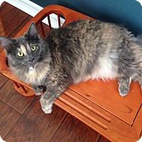 Adopt A Pet :: Truffles - Bentonville, AR