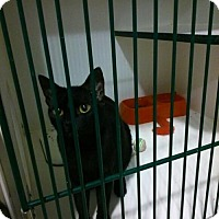 Adopt A Pet :: Cinder - Caistor Centre, ON