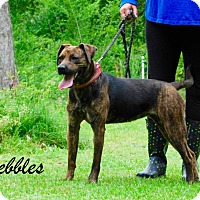 Adopt A Pet :: Pebbles - Daleville, AL