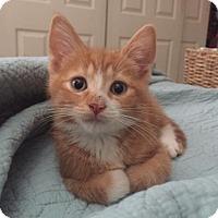 Adopt A Pet :: .Wonton - Baltimore, MD