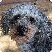 Adopt A Pet :: Oksana - Atlanta, GA