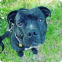 Adopt A Pet :: Jason - Jackson, NJ
