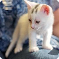 Adopt A Pet :: Winchester - Huntsville, AL
